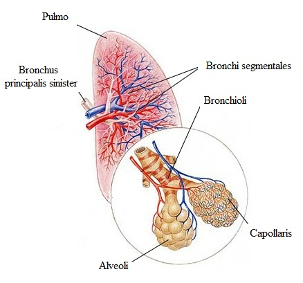hypertoniás tüdő Szüksége van-e sportra magas vérnyomás esetén