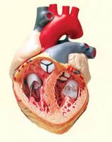 a magas vérnyomás diagnosztizálásának módszerei magas vérnyomás és reishi