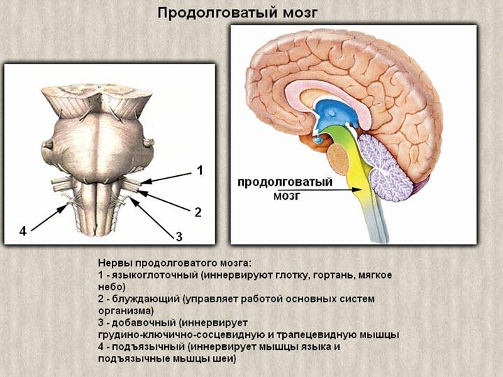Népi gyógyszerek az osteochondrosis Kenőcső nyaki osteochondrozis ellen