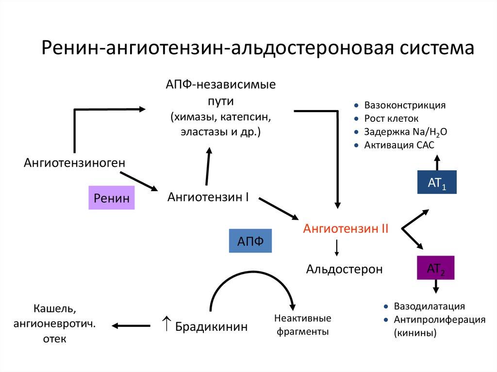 magas vérnyomásszint diagram a nők magas vérnyomásának első jelei
