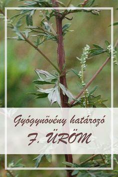 Gyuri bácsi tanácsa: gyógynövényt minden bajra | NOOL