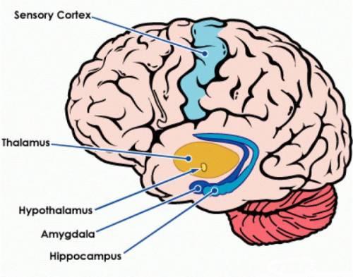 neuraszténikus hipertónia 10 szabály a magas vérnyomás esetén