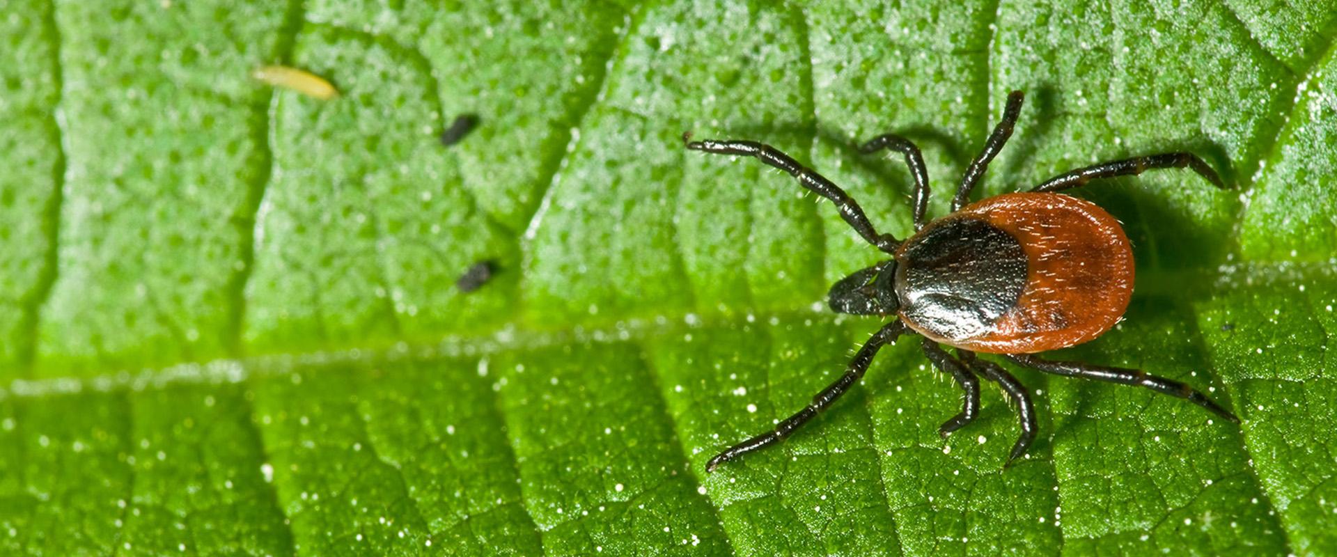 magas vérnyomású bogarak
